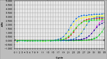 实时荧光定量服务_半定量rt-pcr